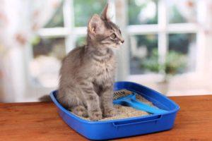 Melhor areia para gatos