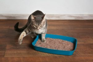 areia para o seu gato