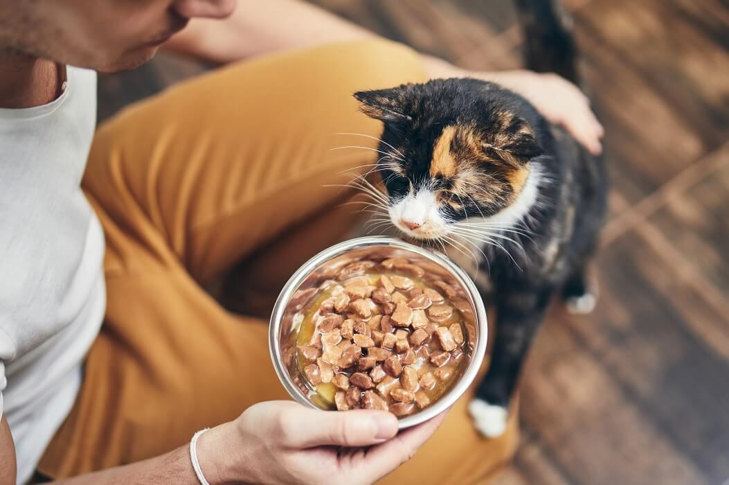 Rações Para Gatos